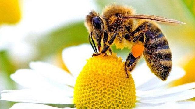 Arılar AIDS hastalığını tedavi edecek