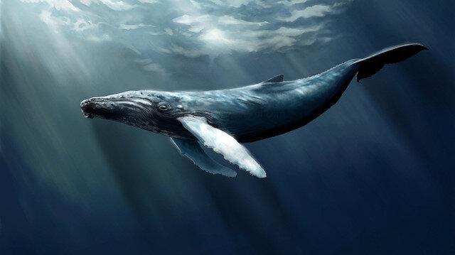 Mavi balina oyunundan kurtulanlar yaşadıklarını anlattı