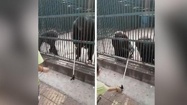 Sevimli şempanze selfie çubuğunu sahibine geri veriyor