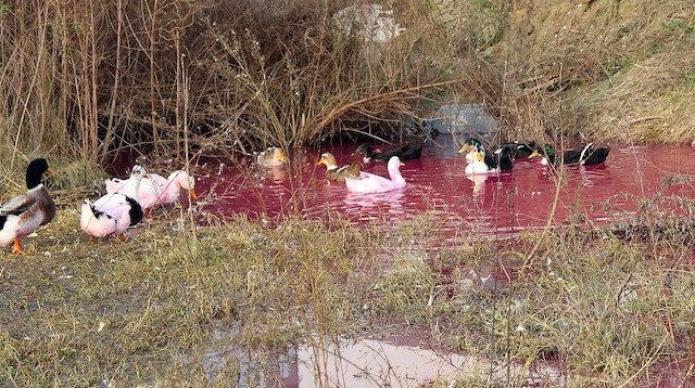 Yalova'da kırmızı su paniği