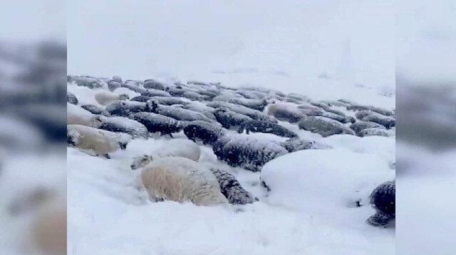 Karda mahsur kalan çobanın ilginç anlatımı izleyenleri kahkahaya boğdu