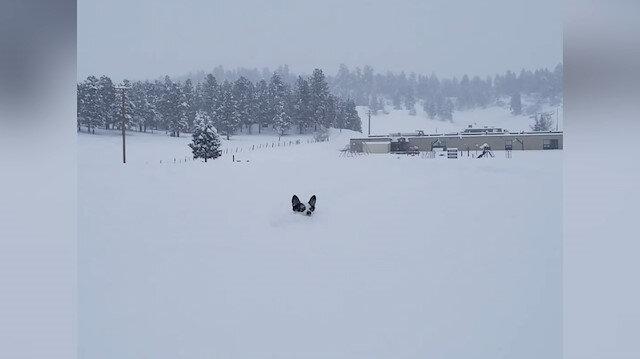 Minik köpeğin karla keyif veren mücadelesi