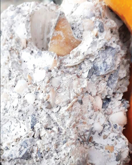 Molozdaki yoğun deniz kabuğu dikkat çekti.