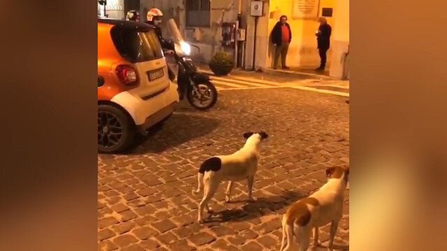 Motosiklete kafayı takan köpekler