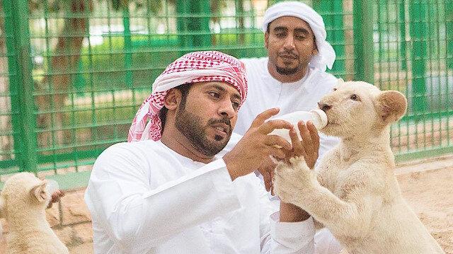 Nesilleri tehlikeye atan hobi: Vahşi hayvan besleyen zengin çocuklar
