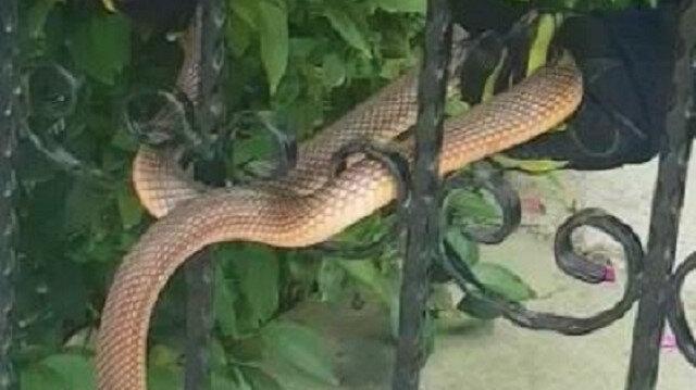 Apartman girişine dolanan 1 buçuk metrelik yılan kurtarıldı