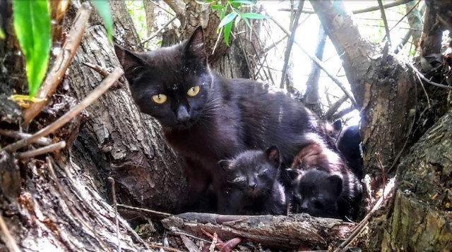 Yavrularını korumak isterken öldü