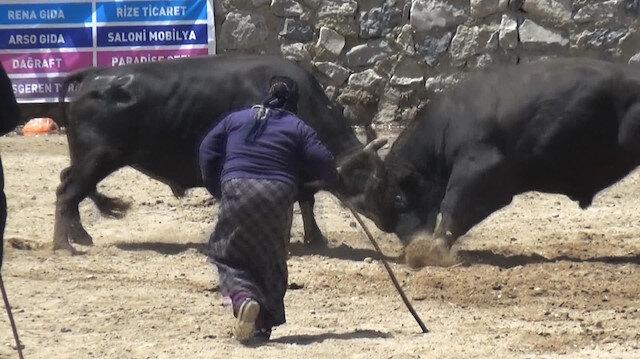 Boğa güreşine Karabelanın sahibi kadın damga vurdu