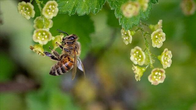 Arı sokması nedeniyle bir haftada ikinci ölüm