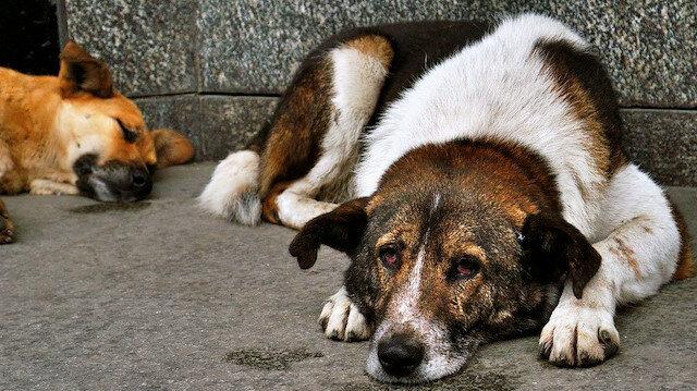 Köpeğe tekme atan kişiye para cezası