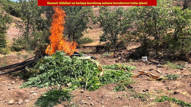 Diyarbakır'da 723 bin kök Hint keneviri ele geçirildi