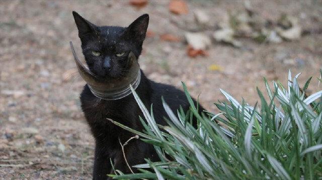 Hatay'da kurtarılmaya çalışılan 'inatçı' kedi yakalandı