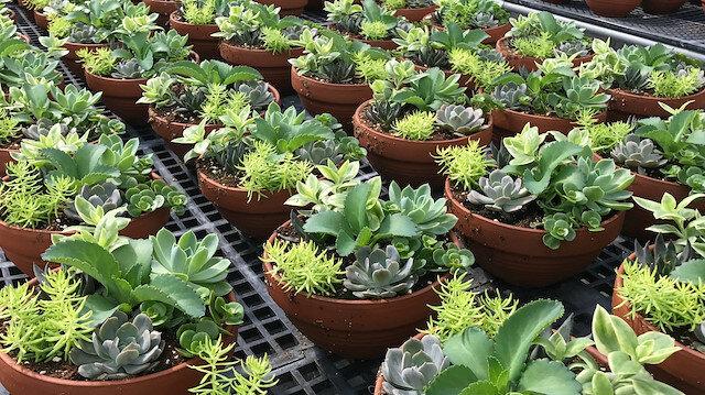 İthal edilen canlı bitkiler gözetime tabi tutulacak
