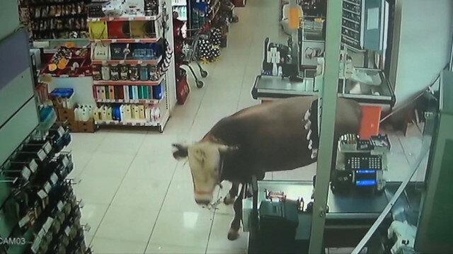Marketede dalan boğa ortalığı karıştırdı