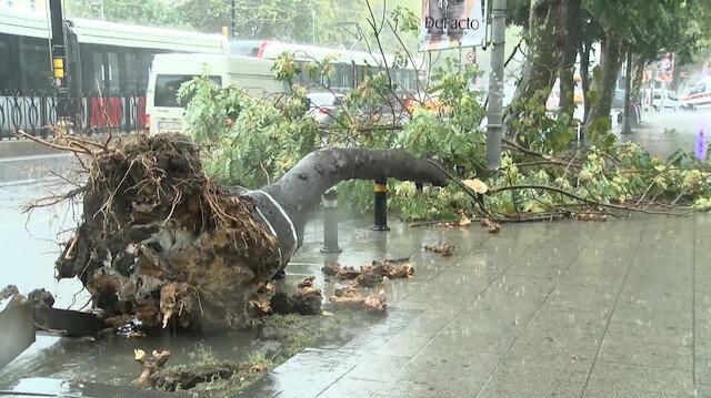 İstanbulda sağanak yağış ağaçları devirdi