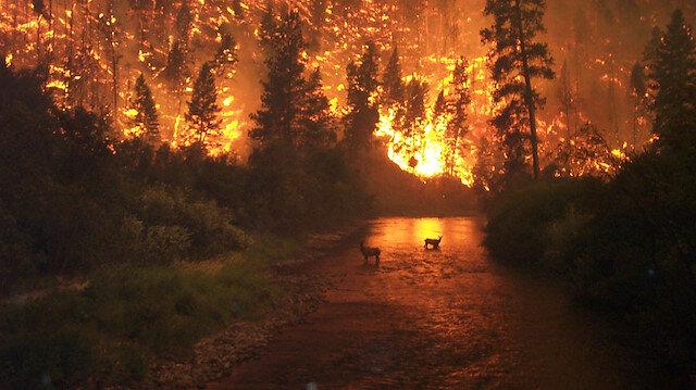 Orman yangınları hız kesmiyor: Sabotaj ihtimali de masada