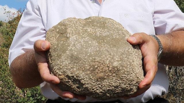 Sivas'ta bulundu: 55 milyon yıllık