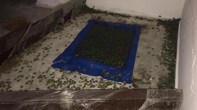 Pizza kutularına saklamışlar: 2 bin 500 su kaplumbağası ele geçirildi