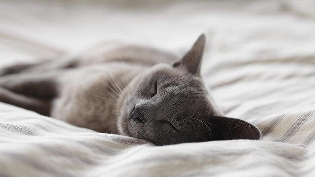 Kavramlar kelimeler ve acayip hakikatler: Uyku