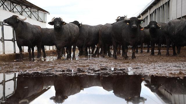 Dünya Süt Zirvesi İstanbulda yapıldı