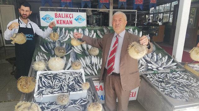 Türkiye kıyılarında  'İstilacı Balon Balığı' tehlikesi: Hayvanları bile zehirliyor