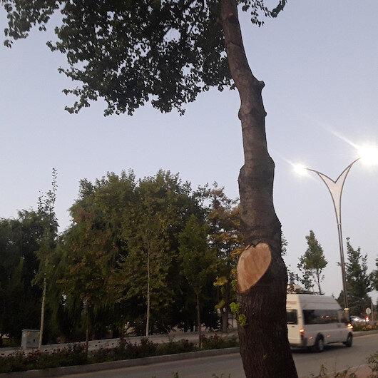 İş yerinin önündeki 2 ağacı kesen esnafa 50 bin TL para cezası