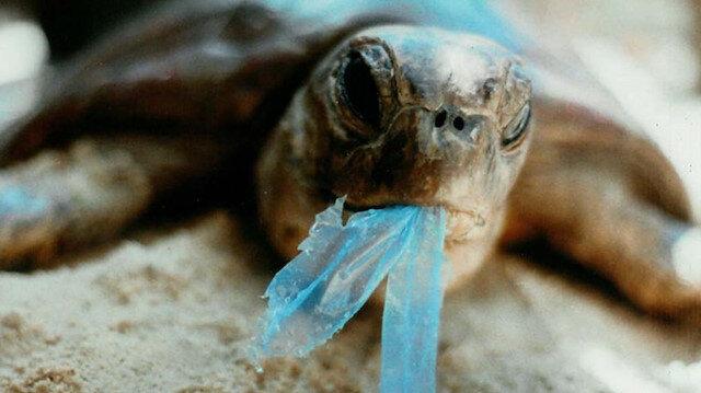 Deniz kaplumbağasının midesinden 104 parça plastik çıktı