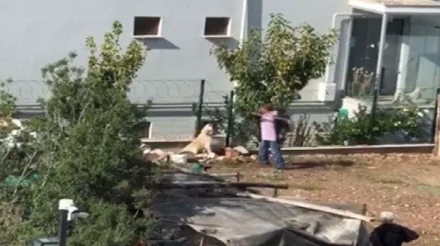 Bağlı köpeği sopa ile acımasızca döven vicdansız adam kamerada