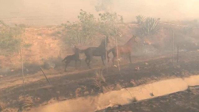 At ailesi için yangının içine daldı