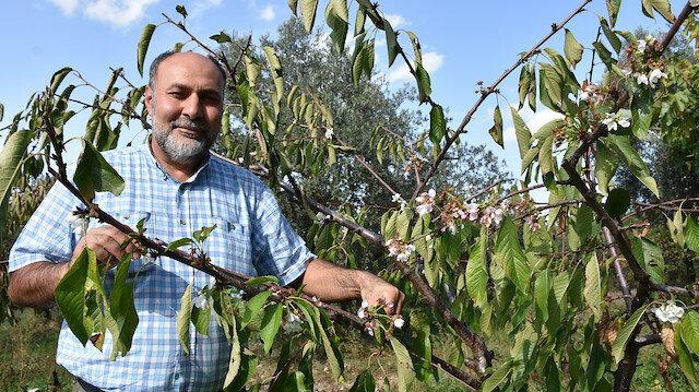 Manisa'da kiraz ve erik ağaçları çiçek açtı: Meyve tutumuna geçtiler