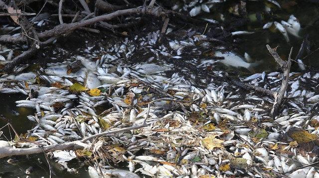 Bursa'da yine çevre felaketi: Manyas'tan doğan Kara Dere'de binlerce balık öldü