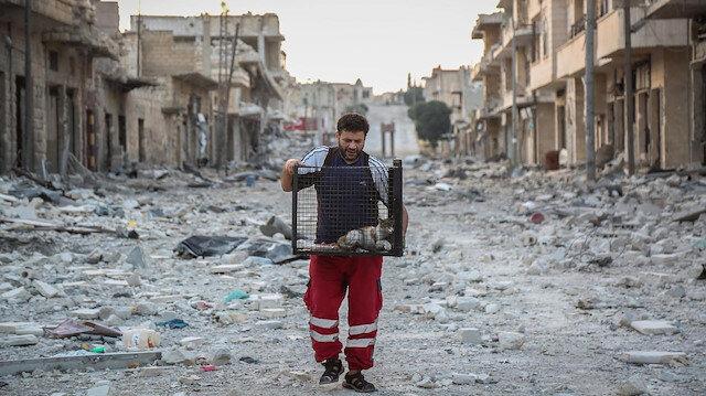 Halep'in savaşzede kedileri ona emanet