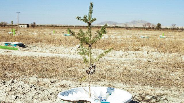 Ağaçlarla büyüyeceğiz