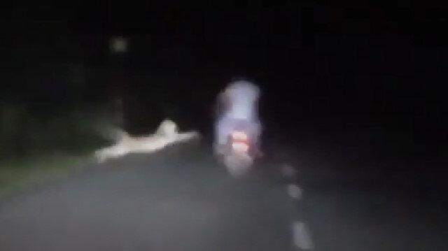 Motosiklet sürücüsü leopar saldırısından son anda kurtuldu
