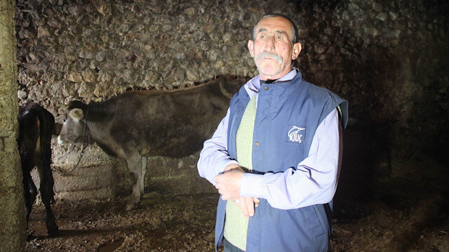 Kayseri'de yola çıkan ineğe trafik cezası kesildi: İneğin ehliyetini alacağız