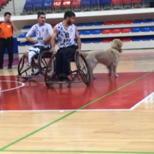 Karabükte sahaya giren köpek nedeniyle maç durdu