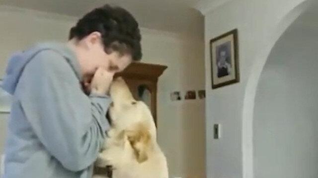 Soğukkanlılık 101: 'Kriz anında fazla sakin kalan köpek'