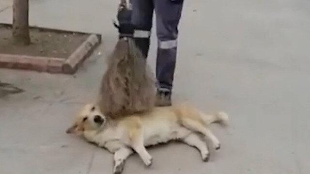 Temizlik görevlisinin süpürgesiyle sokak köpeğini keyiflendirdiği anlar