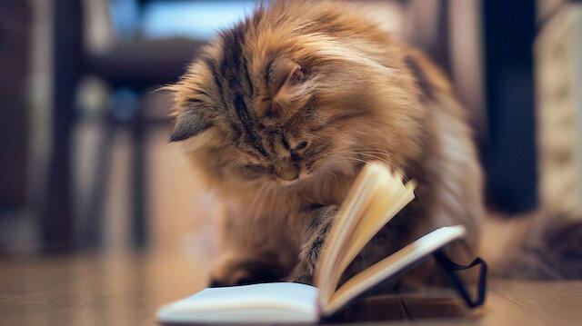 Kedilerin dünyası