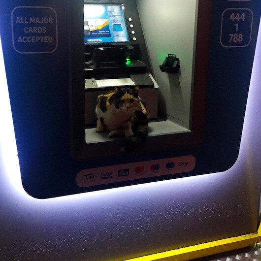 Sokak kedisi fırtınadan korunmak için ATMye sığındı
