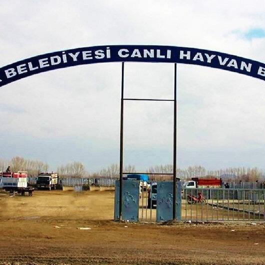 Iğdır'da 'şap hastalığı' paniği: Canlı Hayvan Borsası kapatıldı