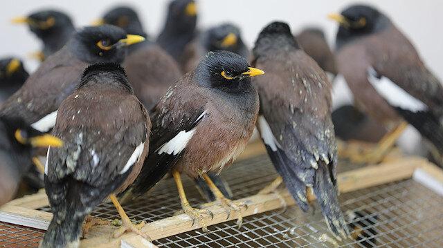 Van'da şüphe üzerine durdurulan araçtan çıktı: Ticareti yasak 75 çiğdeci kuşu ele geçirildi