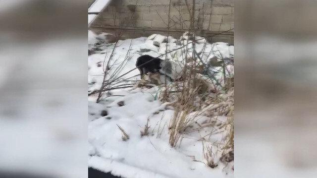 Başını bidona sıkıştıran köpeği jandarma kurtardı