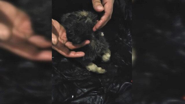 Soğuktan donan köpeği kalp masajı ile hayata döndürdüler