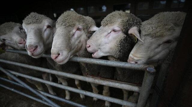 Depremde hayvanları telef olan vatandaşlara hayvan ve yem desteği
