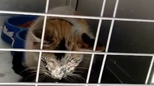 Mucize kedi: Depremden 12 gün sonra çıkarıldı