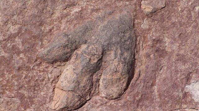 Kanada'da 11 milyon yıllık 'ölüm meleği' fosili bulundu: Bugüne kadar bulunan tyrannosaur türü dinozorların en eskisi