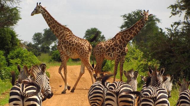 Bir seyahatten çok daha fazlası: Tanzanya