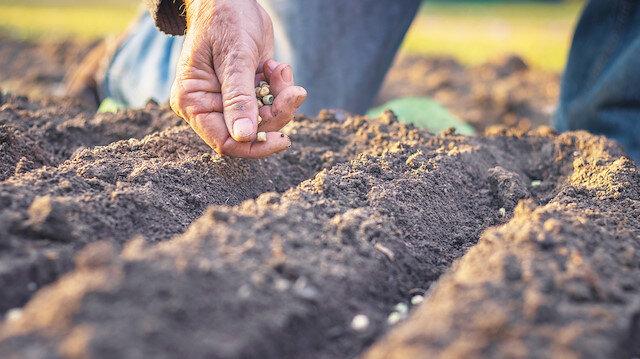 Yerli tohum seferberliği