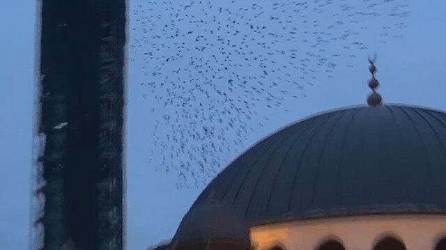 Taksim'de sığırcık kuşlarının dansı hayran bıraktı